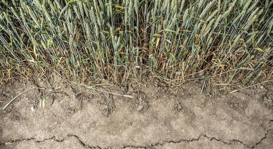 Landmændenes økonomi er visnet væk i sommerens tørke. Derfor er der indkaldt til krisemøde med minister.