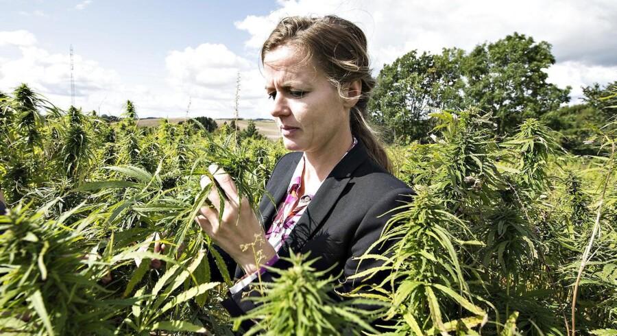 I sidste måned udtalte sundhedsminister Ellen Trane Nørby (V), at »lægerne og videnskaben er bagud i forhold til befolkningen og globale trends«, når det kom til spørgsmålet om medicinsk cannabis. Dén bemærkning har vakt harme i lægekredse.