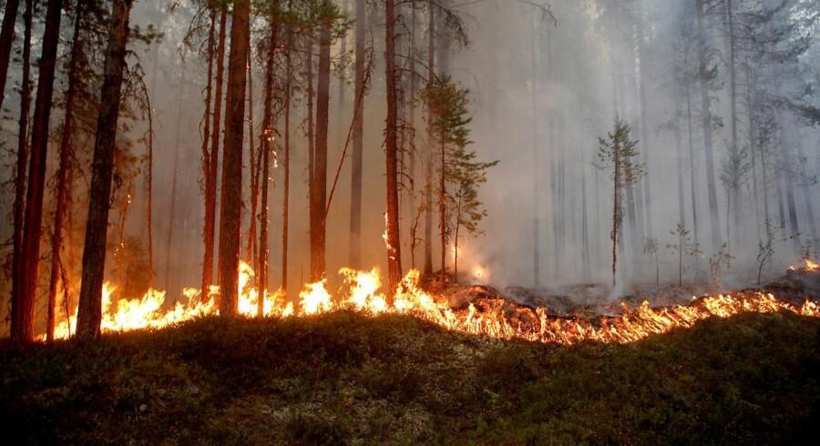 Ifølge den seneste opdatering fra SOS Alarm var der onsdag eftermiddag 20 igangværende naturbrande i Sverige. I midten af juli var der omkring 80 naturbrande samtidig.