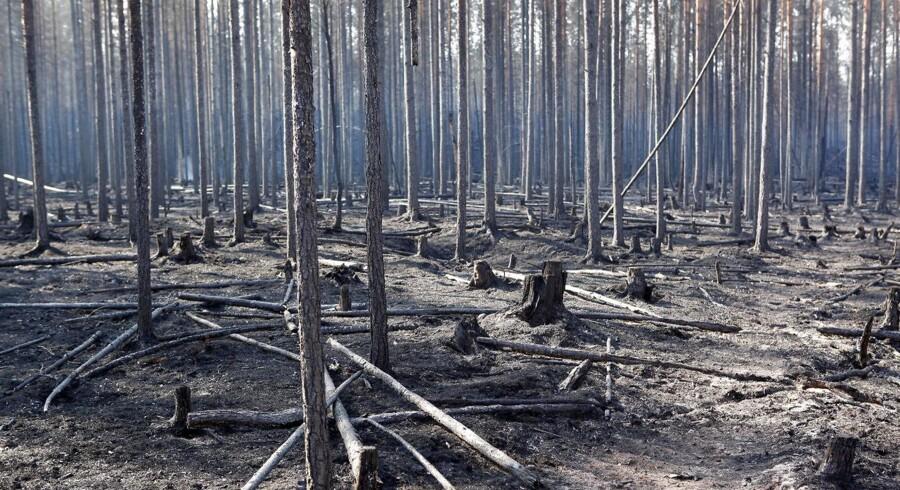 Søndag morgen klokken ni var der 21 naturbrande i Sverige. For halvanden uge siden var tallet 40.