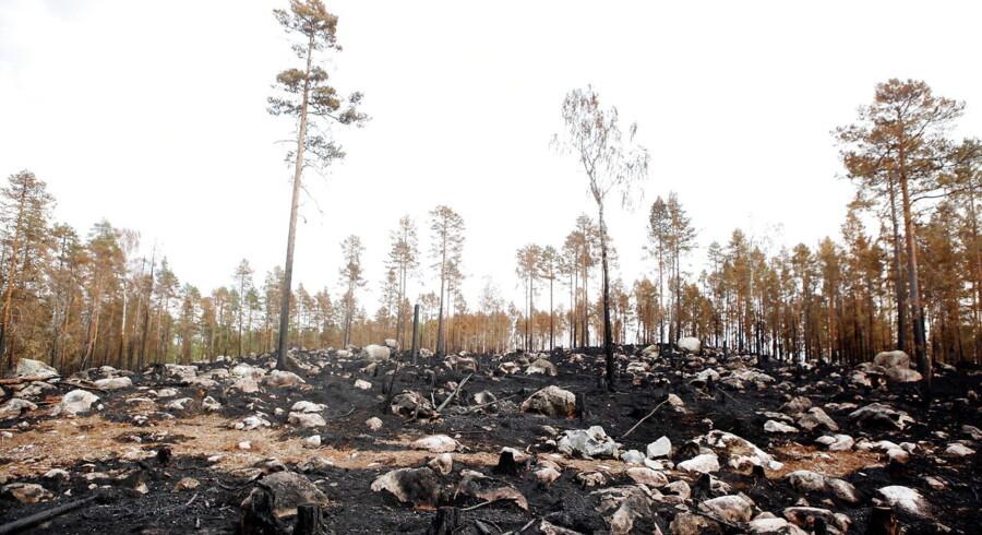 Ljusdal i Sverige er hærget af voldsomme skovbrande.