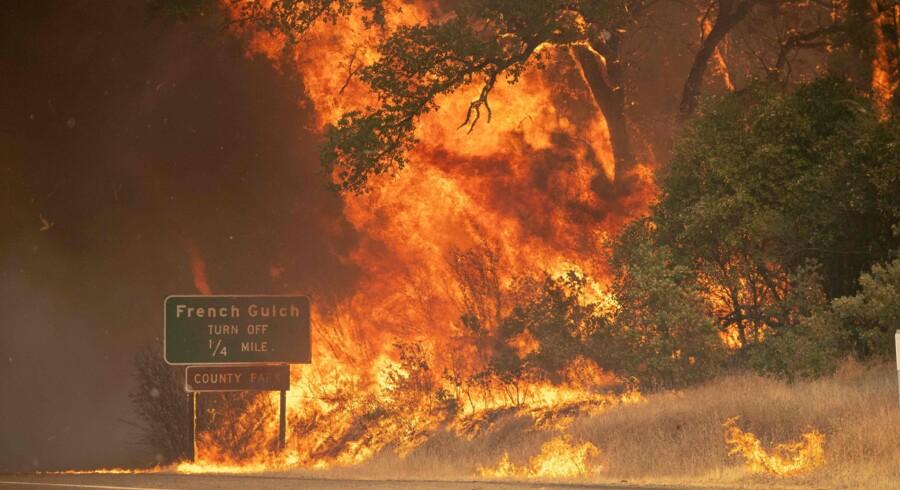 Den amerikanske præsident, Donald Trump, har erklæret undtagelsestilstand i delstaten Californien, hvor mindst 12 store naturbrande hærger. Josh Edelson/Ritzau Scanpix