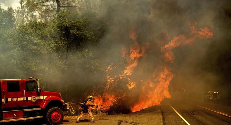 Californien hærges af voldsomme skovbrande. En brand er vokset til at omfatte over 300 kvadratkilometer.