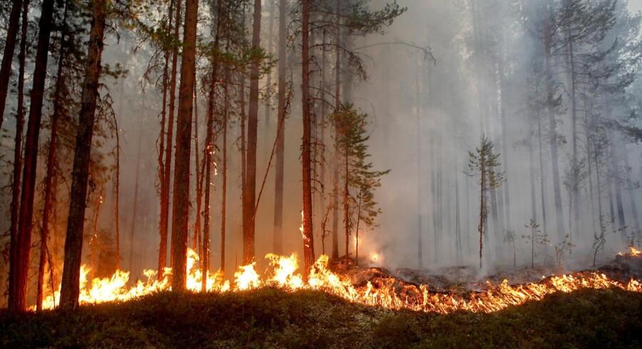 Skovbrand i Karbole, Ljusdal Kommune. Varmen og tørken bliver ved med at ramme Sverige hårdt: De svenske myndigheder kunne fredag aften melde om hele 83 brande i landet.