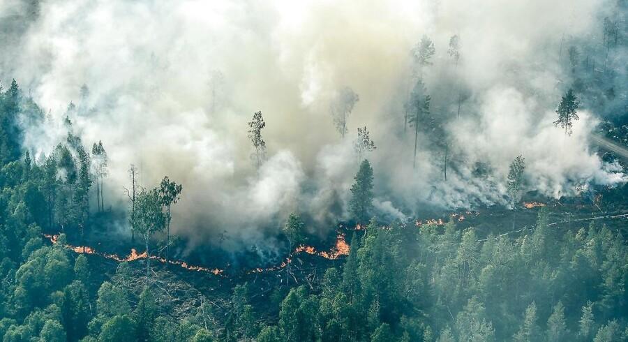 De voldsomme skovbrande i Sverige fortsætter. Her ved Ljusdal.