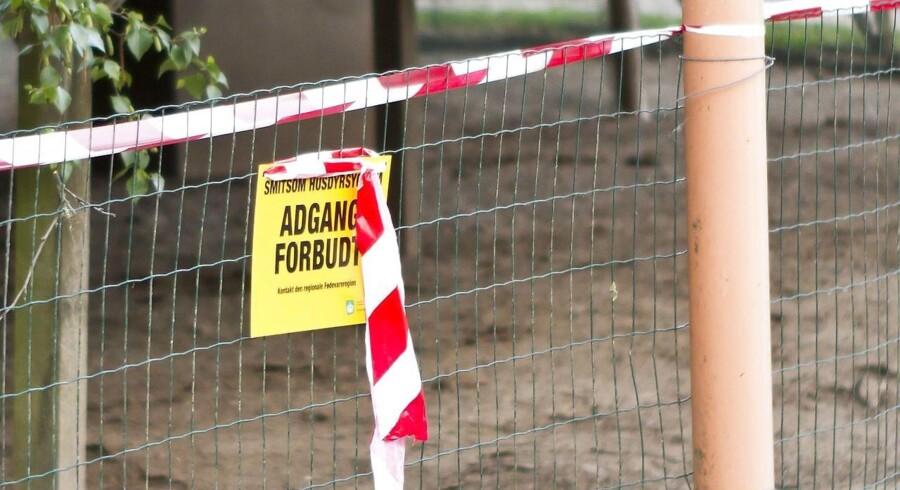 Arkivfoto.Selv om det er unormalt at finde fugleinfluenza om sommeren, får nyt fund ikke konsekvenser for eksporten.