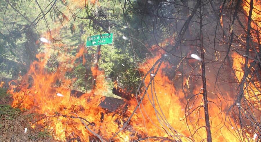 Skovbrand på Highway 120. Den største skovbrand nogensinde i Californien er stærkt på vej ind i den kendte nationalpark Yosemite.