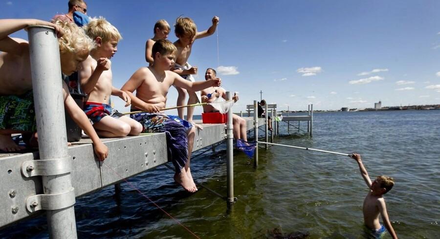 Temperaturer tæt på 30 grader påvirker den danske natur på mange måder, der på forskellig vis påvirker både dyr og mennesker. Her fiskes der efter krabber.