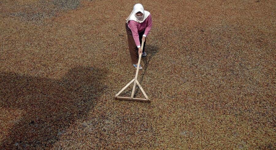 Arkivfoto: Kvinde arbejder på en kaffeplantage i Indonesien.