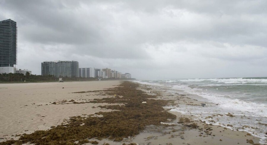 Winds and rain begin to hit the beach as outer bands of Hurricane Irma arrive in Miami Beach, Florida, September 9, 2017. Hurricane Irma weakened slightly to a Category 4 storm early Saturday, according to the US National Hurricane Center, after making landfall hours earlier in Cuba with maximum-strength Category 5 winds. / AFP PHOTO / SAUL LOEB