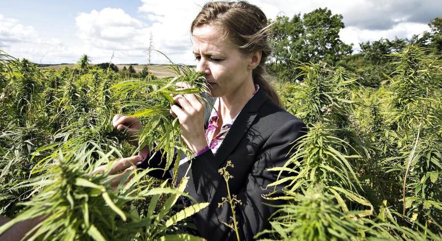 Ellen Trane Nørby (V) udtaler, at afviste cannabispatienter bør gå til anden læge. Arkivfoto.
