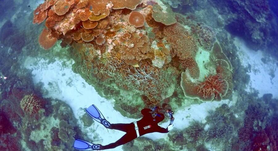 ARKIVFOTO 2016 af Great Barrier Reef. Samtlige af verdens koralrev vil hvert år miste deres farve, hvis ikke den globale opvarmning bliver stoppet, advarer forskere. (Foto: DAVID GRAY/Scanpix 2017)