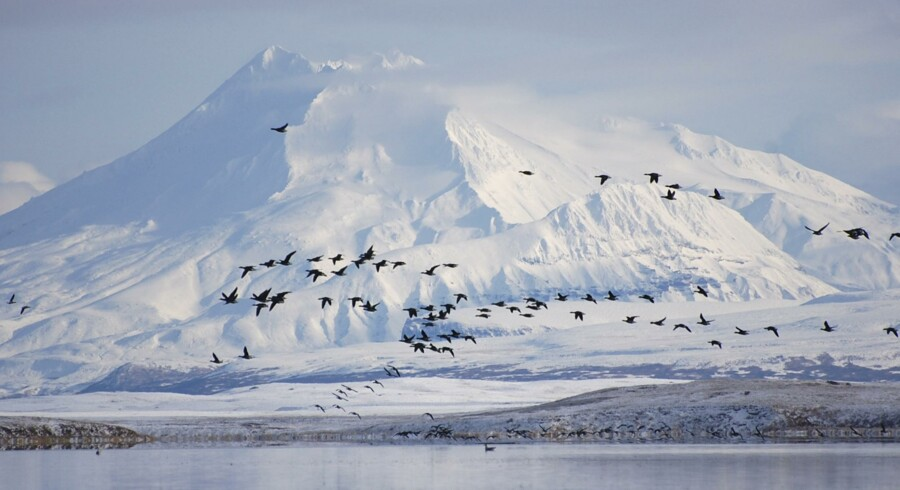 Et jordskælv, der har en styrke på 7,8, har ramt mellem en halvø i det østlige Asien og øgruppen Aleuterne (billedet) i det vestlige Alaska, hvor der heldigvis bor hovedsageligt fugle. Reuters/Handout/arkiv