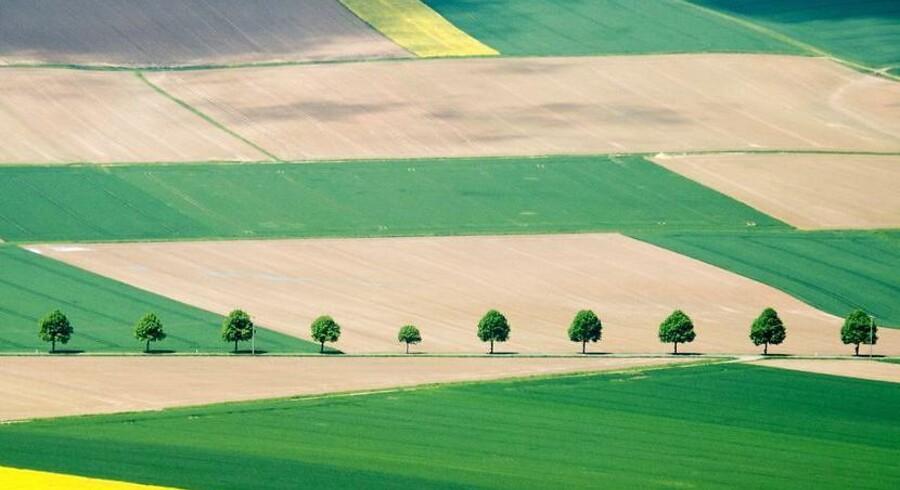 Marker med række af træer nær Hildesheim i det centrale Tyskland.