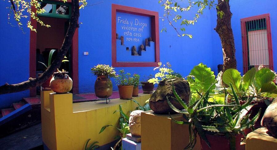 Kaktusser var en vigtig del af malerinden Frida Kahlos liv.