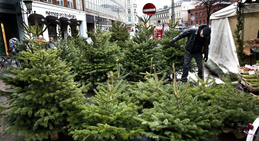 Juletræsbranchen forudser, at der i fremtiden vil blive afsat endnu flere juletræer til detailkæderne i udlandet.