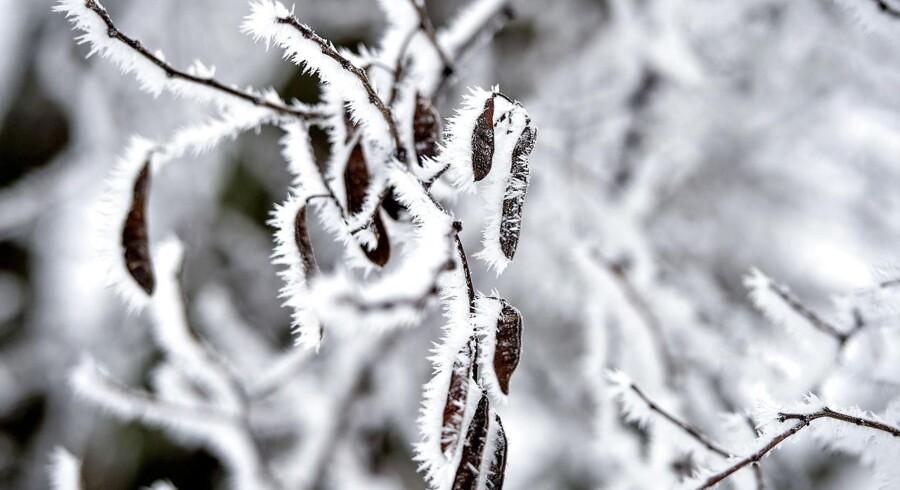 ARKIVFOTO. Vinter. Sne og frost.
