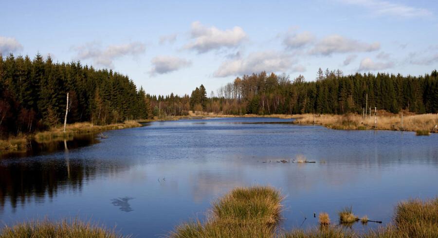 Nationalpark vil tiltrække turister - motiv fra Grib Skov København, Lørdag /ritzau/ En nationalpark i Nordsjælland kan give turismen i området et løft. SE RITZAU