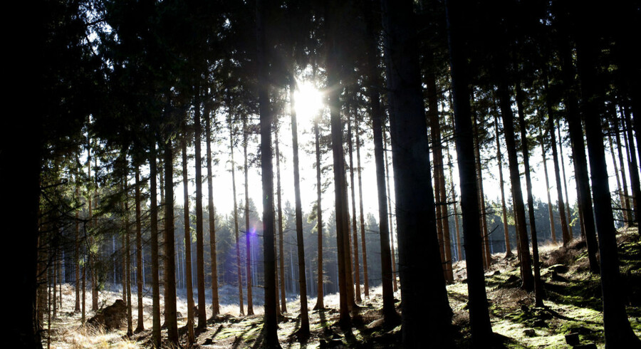 Fem områder har været i spil til titlen som nationalpark. Tre er indviet og ligger ved henholdsvis Thy, Mols Bjerge og Vadehavet, mens den fjerde Kongernes Nordsjælland venter på en politisk afgørelse og placeringen ved Skjern Å netop har fået dødsstødet. Se områderne her. Her er det den måske kommende nationalpark Kongernes Nordsjælland fra Gribskov nord for København.