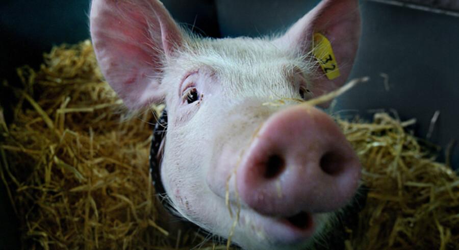 Det nye regelsæt fra Fødevareministeriet vil i nogle landbrug betyde en halvering i antallet af de obligatoriske dyrlægebesøg.