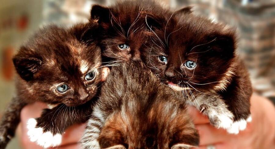 Kattens Værn hjælper cirka 7.000 hjemløse katte årligt.