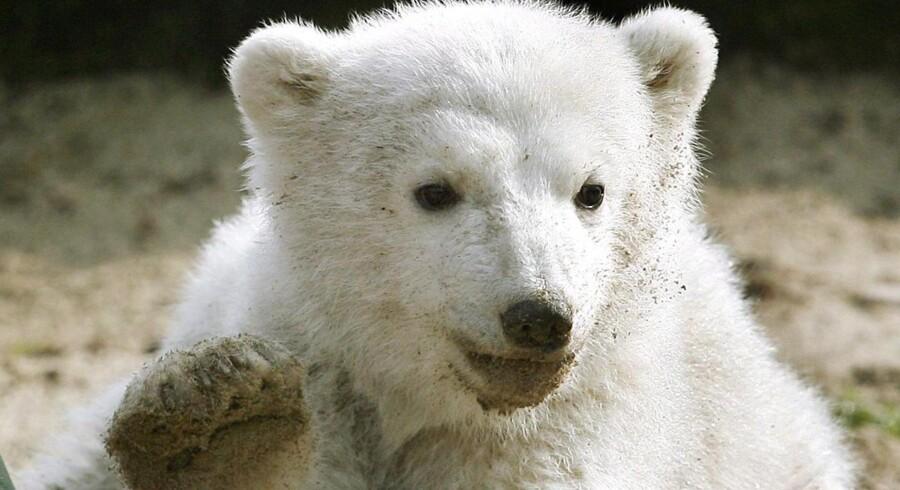 lhomas Doerflein viste for første gang Knut frem for offentligheden 23. marts 2007.