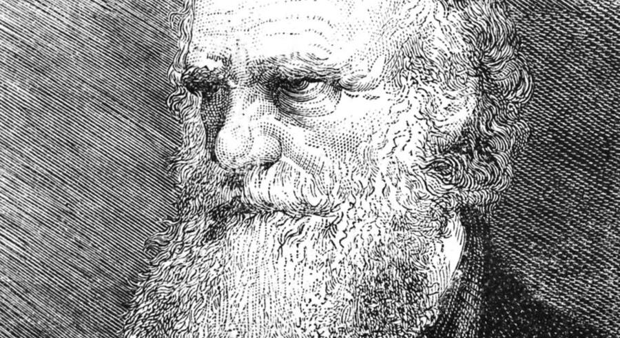 Nogle af de fossiler, Darwin har haft fingre i på en af sine indledende rejser tilbage i 1834, er nu dukket op igen.