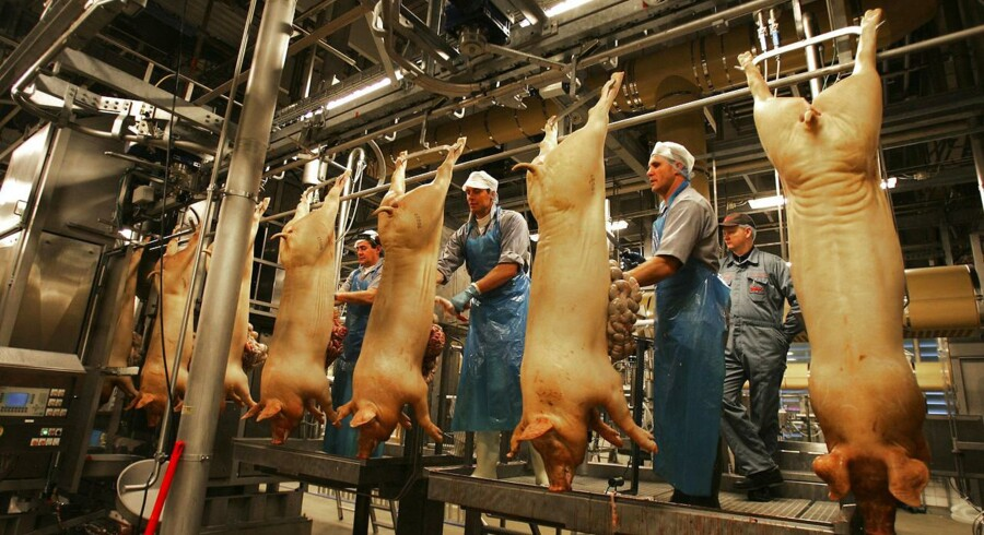 Når svineslagterierne i Danmark kører på fuld tryk i dagtimerne, tømmer vi omkring 8.000 grise for blod i timen. Det er op mod 140 i minuttet. To en halv gris i sekundet.
