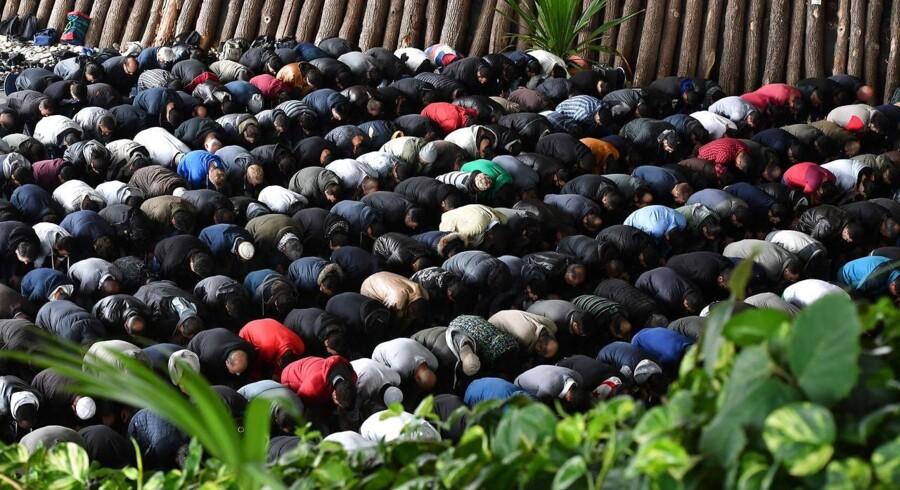 Muslimer under bøn i Potsdam efteråret 2016. I den tyske by Wuppertal vækker et gymnasium nu opsigt med et forbud mod muslimske elevers 'provokerende bøn'.