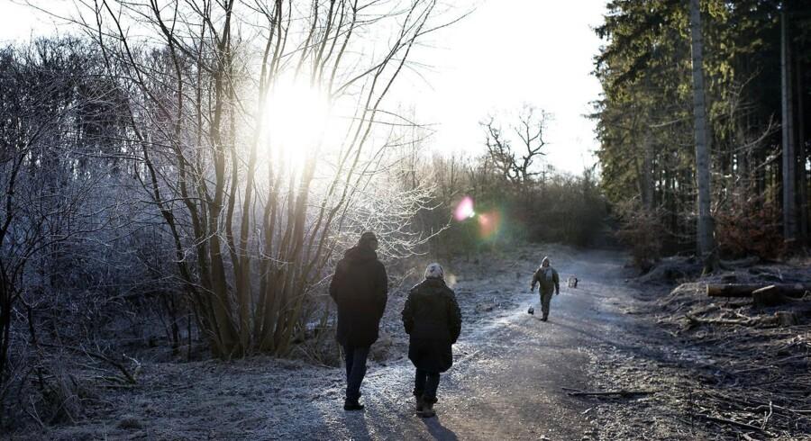 Den kommende uge, hvor mange skoler holder vinterferie, behøver danskerne ikke sætte næsen op efter en tur på kælkebakken. (Foto: Liselotte Sabroe/Scanpix 2016)