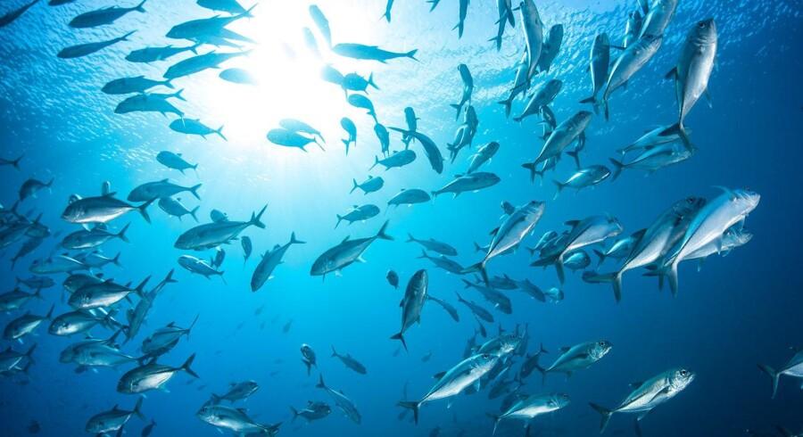 Arkivfoto. Vietnam mener, at et fiskeriforbud i dele af Det Kinesiske Hav krænker landets suverænitet over Paraceløerne.