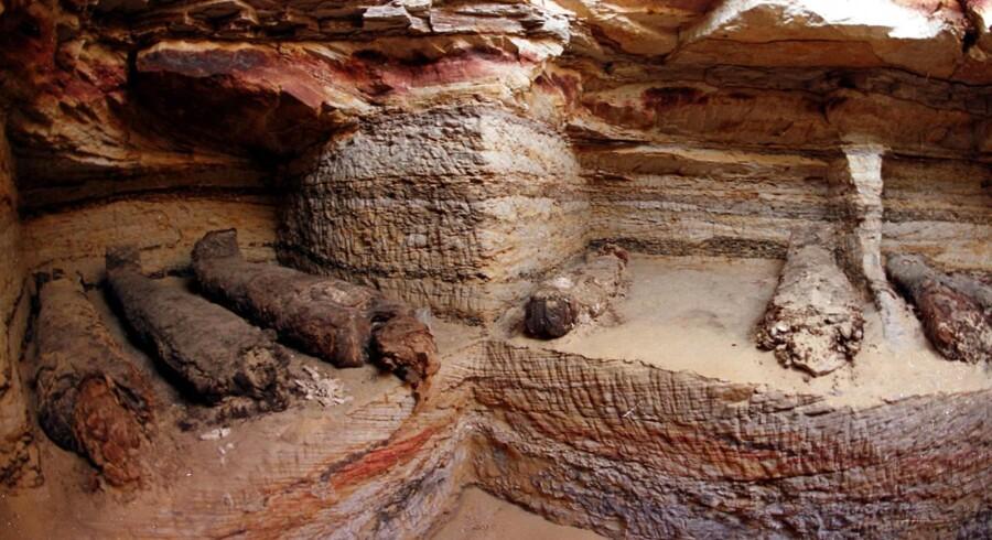 Tre af Nationalmuseets mumier skal for første gang CT-skannes, så man kan blive klogere på indholdet af dem, uden at risikere at ødelægge de skrøbelige, balsamerede lig. Her ses seks andre mumier, fundet i Bahariya-oasen i Egypten i 2001.