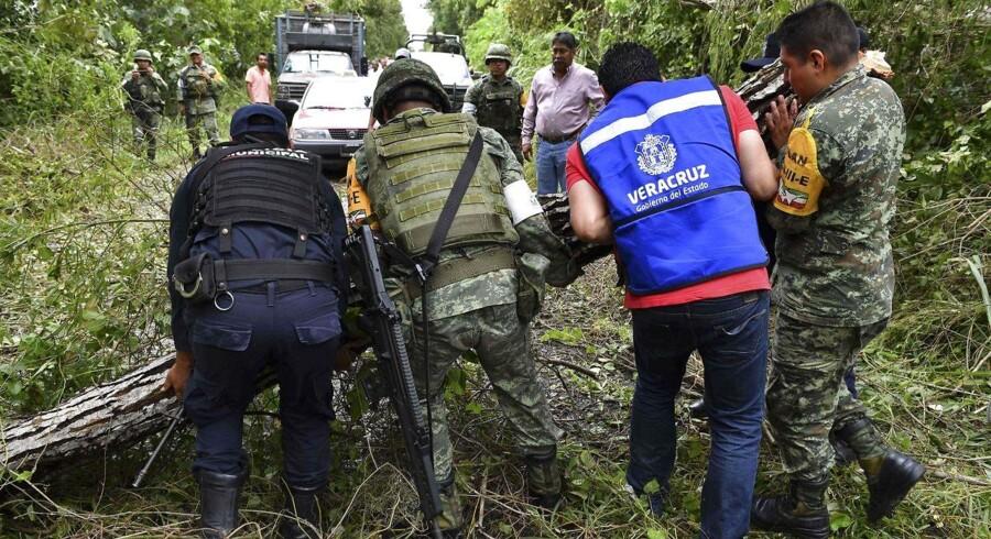 Mexicanske soldater og politifolk flytter et væltet tre, som blokerer en vej, efter orkanen Katia har hærget Boca de Lima / AFP PHOTO / YURI CORTEZ