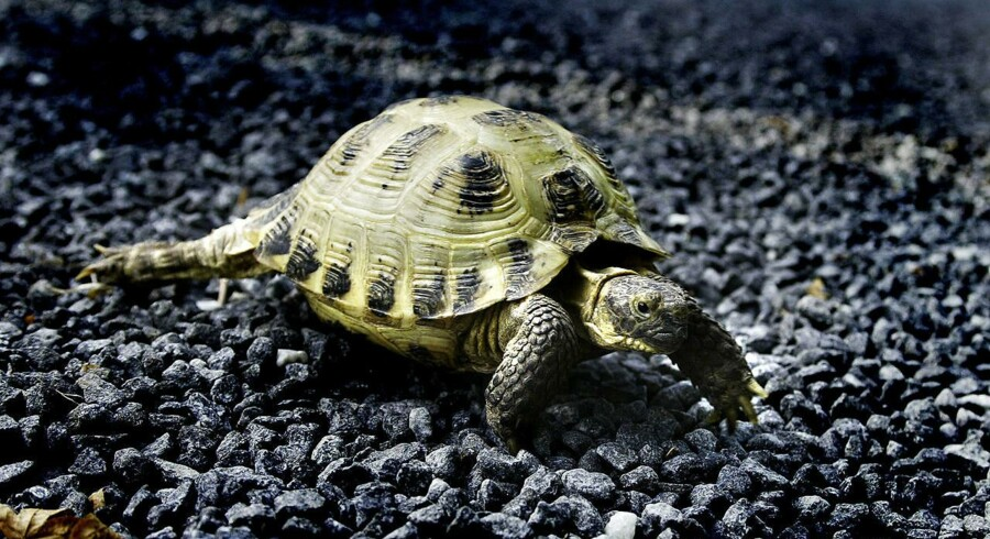Illegal handel med eksotiske dyr udgør en stadig større trussel for en række dyrearter, advarer WWF.