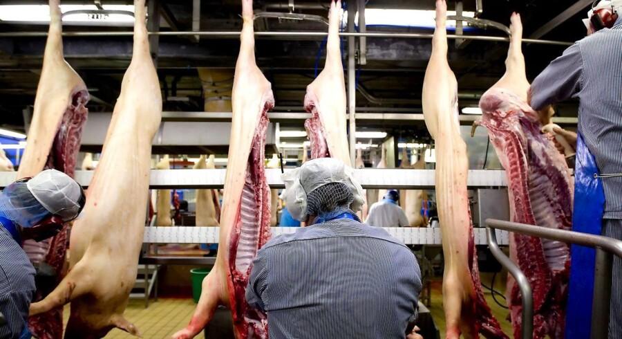 Medlemmerne af NNF, deriblandt slagteriarbejdere, skal ikke snydes for efterløn, mener forbundet.