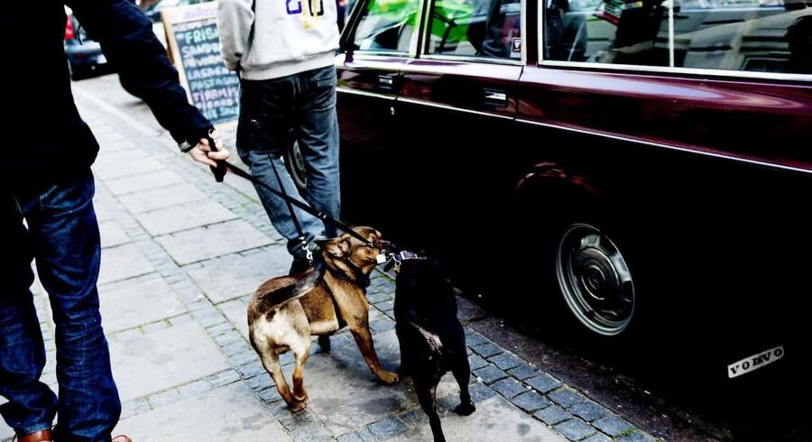 Pusherne skal så hurtigt som muligt også væk fra Nørrebroparken, mener overborgmester Frank Jensen (S).