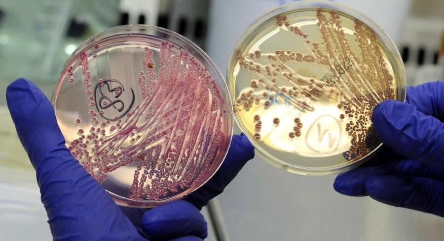 En forsker fremviser pretriskåle med VTEC-bakteriet på mikrobiologisk laboratorium ved 'Universitaetsklinikum Hamburg-Eppendorf '