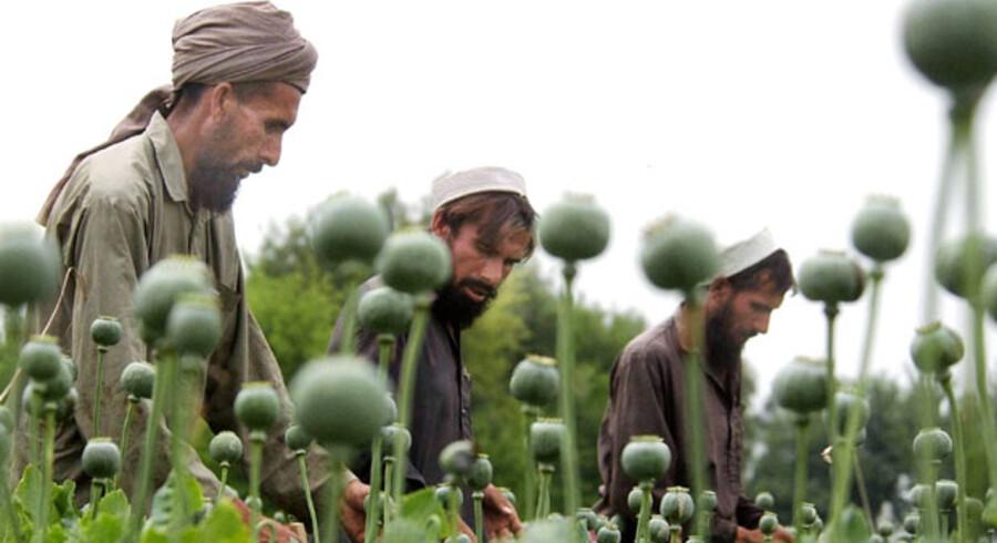 I 1980 produceredes både legalt og illegalt ca. 2.000 tons opium i verden. I 2006 producerede Afghanistan alene 6.100 tons, 92 procent af verdensproduktionen, mere end nogensinde før. Vestens indsats mod opium har simpelthen slået fejl.
