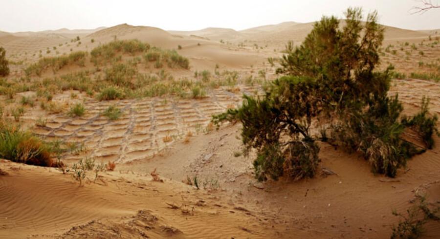 Før i tiden tog det et kvarter at gå fra bagsiden af familien Lus firelængede gård til ørkenens kant. Nu tager det kun et par minutter, før Tengger-ørkenens gyldne sanddyner begynder.