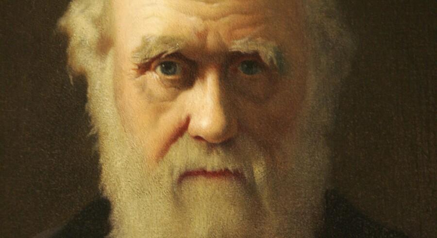 Kunstneren John Colliers portræt af Charles Darwin fra 1883.