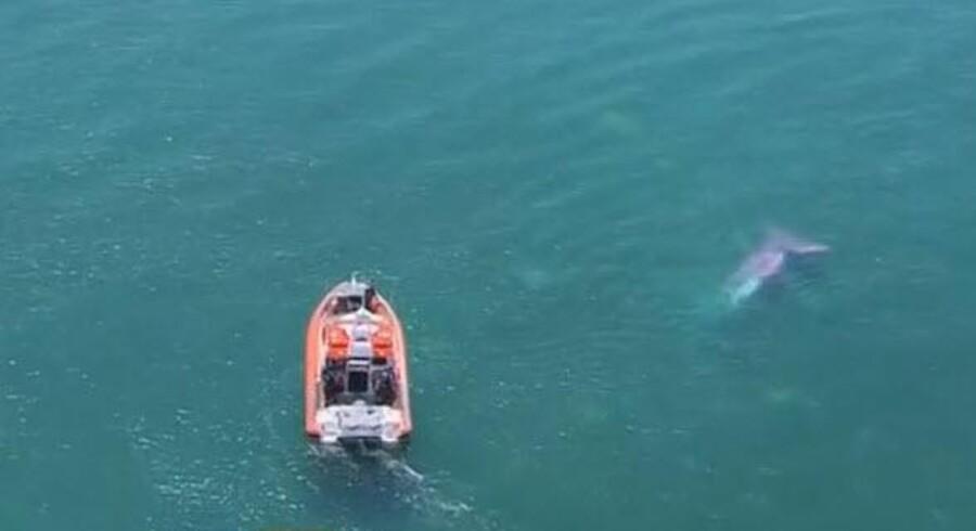 Vraget af flyet i Lake Taupo i New Zealand.