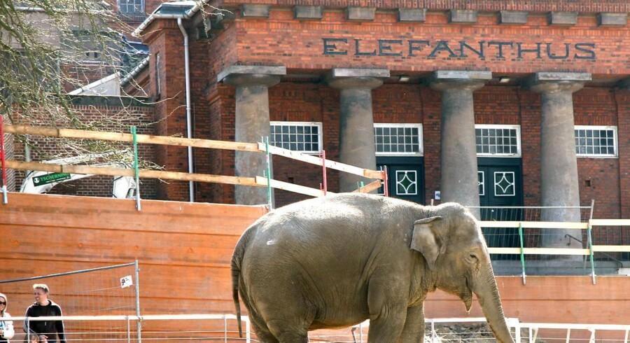 Nyt mødte gammelt i 2008, da elefanterne i Københavns Zoo skiftede fra det gamle Elefanthuset til deres nye og meget større anlæg tegnet af stjernearkitekten Norman Foster.