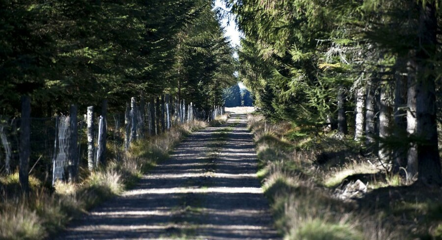 Danske naturfredninger er sjældent helhjertede, og det er et stort problem for vores natur.
