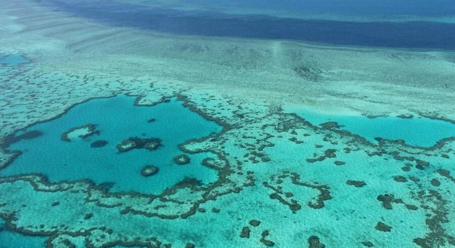 Arkivfoto: Verdens største koralrev lider under de stigende havtemperaturer. Store dele af revet er allerede dødt.