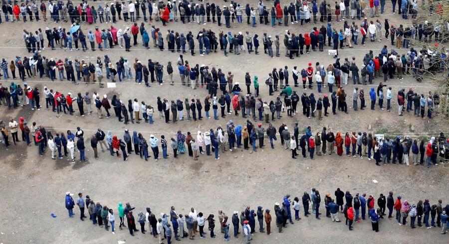 Køer foran en valgpost ved det nu annullerede kenyanske valg.