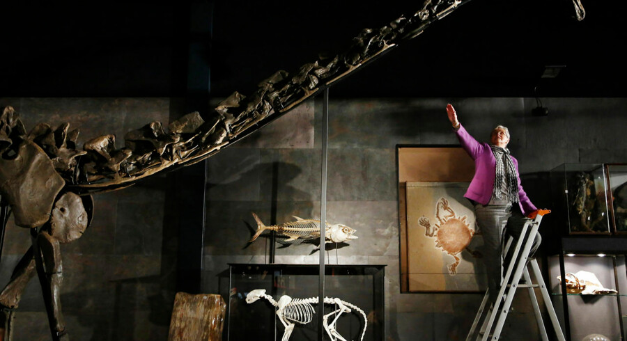 """Employee Julia Thomas poses with a diplodocus skeleton named """"Misty"""", at Summers Place Auctions in Billingshurst, southern England November 25, 2013. The 17 meter skeleton unearthed in Wyoming is expected to sell for 600, 000 GB pounds (U.S. $970, 000) when it is auction as part of the """"Evolution"""" sale at the auction house on November 27. REUTERS/Luke MacGregor (BRITAIN - Tags: ANIMALS ENVIRONMENT SOCIETY)"""