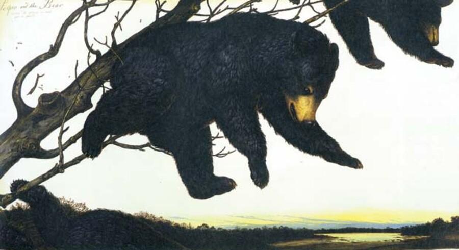 Pas på faldende bjørne. De to bamser er på vej ned fra træet, fordi jægerne har tændt bål under det. Beretningen stammer fra en bjørnejagt beskrevet af den amerikanske dyremaler, John James Audubon, som Walton Ford er inspireret af.