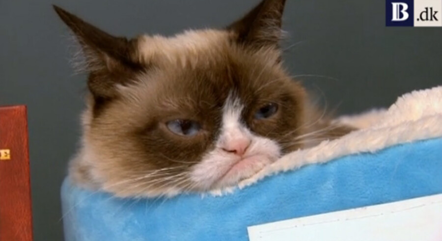 Internet fænomenet »Grumpy Cat« er på turne for at promovere sin nye bog »The Grumpy Guide to Life«