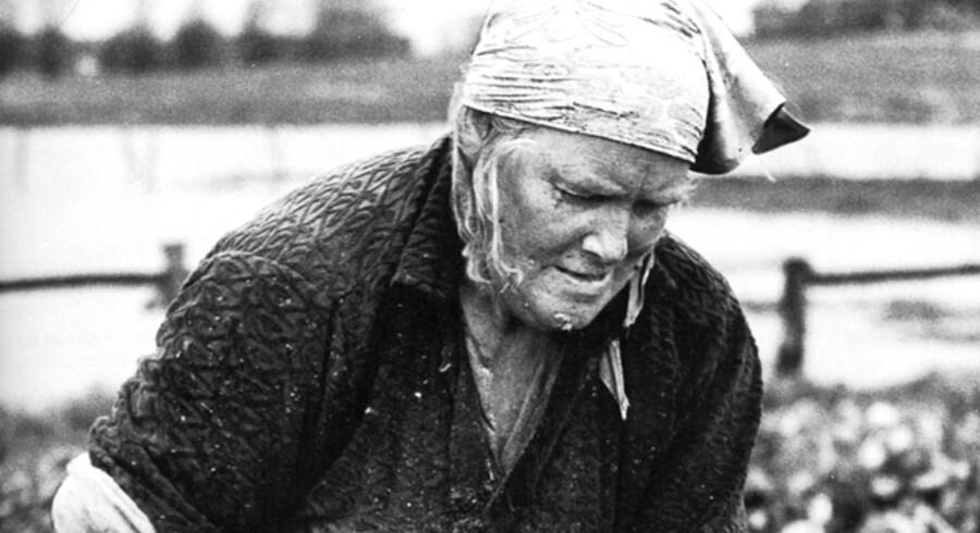 Roerne skal bjærges, inden frosten sætter ind. De aftoppede roer lægges i kule og dækkes med halm og jord. Foto fra bogen/Scanpix