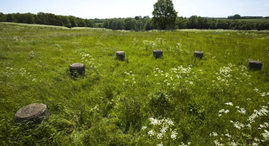 En af stolpekredsene markeret i Rispebjergs græs.